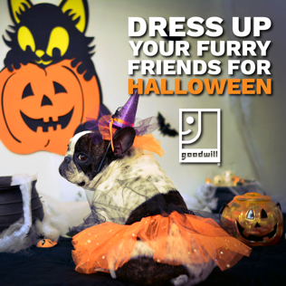 Dress Up Your Furriest Friends for Halloween